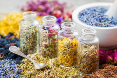 Bottles of healing herbs and mortar with dry lavender flowers Stock Image