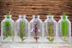 Bottles of herb thyme ,basil flower ,rosemary ,parsley and sage Royalty Free Stock Image