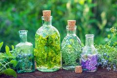 Bottles of herbal infusion and healing herbs outdoors. Herbal me Stock Photo