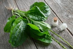 Homeopathic globules and Plantain. Homeopathy medicine. Top view. Stock Photography