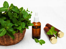 Bottles of mint oil and fresh mint. Bottle of mint oil and fresh mint  on a old wooden background Stock Photo
