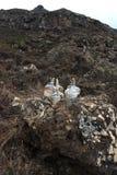 Bottles on mountain Stock Images