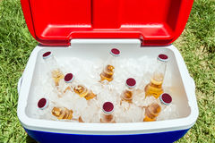 Free Bottles Of Beer In Cooler Box With Ice Royalty Free Stock Image - 64971996
