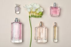 Bottles of perfume and flower on light background. Top view Royalty Free Stock Photo