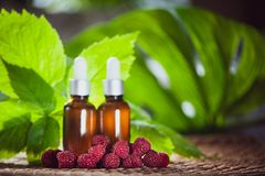 Bottles with raspberry oil, fresh berries and raspberry leaves o. N a natural green background Stock Image