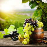 Bottles of red and white wine with fresh grape. On vineyard background royalty free stock images