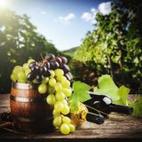 Bottles of red and white wine with fresh grape Stock Photos