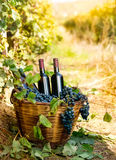 Bottles of red wine and grapes in basket Royalty Free Stock Photography