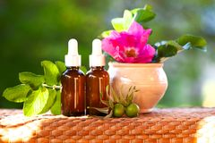 Bottles with rosehip oil and fresh branches , flower on a natural green background, bio, organic , nature cosmetics concept royalty free stock photos