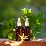 Bottles with rosehip oil and fresh branches , flower on a natural green background, bio, organic , nature cosmetics concept stock photography
