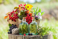Bottles of tincture, box of healthy herbs and berries. Outdoors, herbal medicine. Selective focus Royalty Free Stock Photos