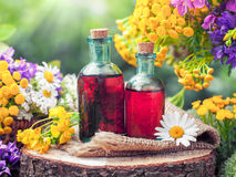 Bottles of tincture or cosmetic product and healing herbs. Royalty Free Stock Photography