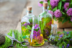 Bottles of tincture of healing herbs, scissors and medicinal herbs. Stock Image