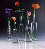 Bottles used for vases with flowers Stock Photography