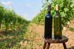Bottles of vine without empty label. Stock Photo