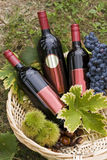 Bottles of wine. Bottle of red wine in the basket with some autumn fruits Stock Photo