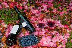 Bottles, wine glasses with blueberry in rose garden. For couples royalty free stock image