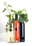 Bottles wine and grapevine Stock Photography