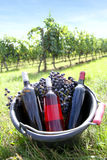 Bottles of wines in middle of vineyard Stock Photos