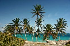 Bottom bay. Barbados Royalty Free Stock Photo