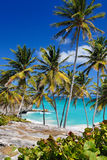 Bottom Bay, Barbados. Tropical Palms in bright sunshine at Bottom Bay, Barbados Royalty Free Stock Image