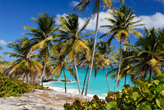 Bottom Bay, Barbados. Tropical Palms at Bottom Bay, Barbados Royalty Free Stock Photos