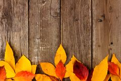 Bottom border of colorful autumn leaves over rustic wood Stock Image