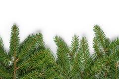 Bottom border from fir twigs stock photos