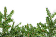 Bottom border from fir twigs Royalty Free Stock Photo