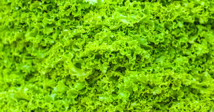 Bottom border of fresh green lettuce salad leaves texture. Close up of healthy lifestyle and dieting background.  Stock Photo