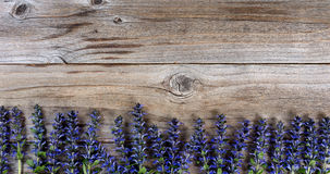 Bottom border of fresh purple spring wild flowers on rustic wood. Wild purple spring flowers forming bottom border on rustic wood. Flat lay view with copy space Royalty Free Stock Photography