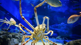 Bottom close up view of red crab slowly climb stock video footage