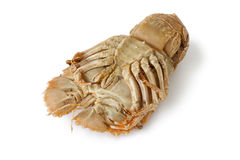Bottom of a cooked flathead lobster Stock Photo