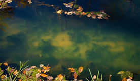 The bottom of the creek. In the autumn park Stock Image