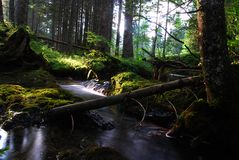 Bottom of forest. Shoot in the evening in 1500 Metres high on a mountain. Flow of water and the evening sun Royalty Free Stock Photo