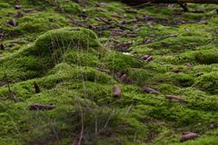 Bottom forest moss Royalty Free Stock Image