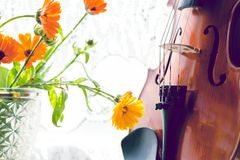 Free Bottom Half Of A Violin With Sheet Music And Flowers The Front Of The Fiddle On Windows Background Royalty Free Stock Photo - 155157105