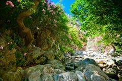 In the bottom of Kourtaliotiko gorge. Stones, flowers and water in the bottom of Kourtaliotiko gorge in Crete Stock Image