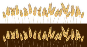 Bottom page wheat field design element. Vector. Isolated illustration. Stock Images
