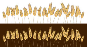 Bottom page wheat field design element. Vector. Isolated illustration. Stock Photo