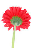 Bottom of red flower royalty free stock photo