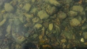 Bottom of the river is seen through water. small fish swim in a shallow stream of a creek.  stock footage
