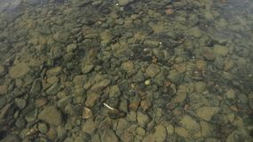 Bottom of the river is seen through water. small fish swim in a shallow stream of a creek.  stock video footage