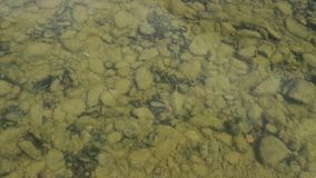 Bottom of the river is seen through water. small fish swim in a shallow stream of a creek.  stock video