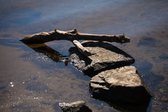 Bottom. Of the river with stones and wood Stock Photography