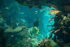 Bottom of the sea. Stock Photo