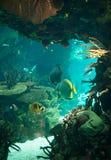 Bottom of the sea. Stock Image