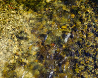 Bottom of the stream with specks. Water background Royalty Free Stock Image