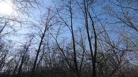Bottom of the tops of trees without leaves in early spring. Circular panorama of trees against the blue sky in the forest and melted snow stock footage