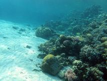 Bottom of tropical sea with coral reef Stock Photography
